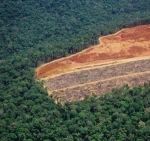 20070511_deforestation