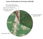 deforestation-in-the-amazon